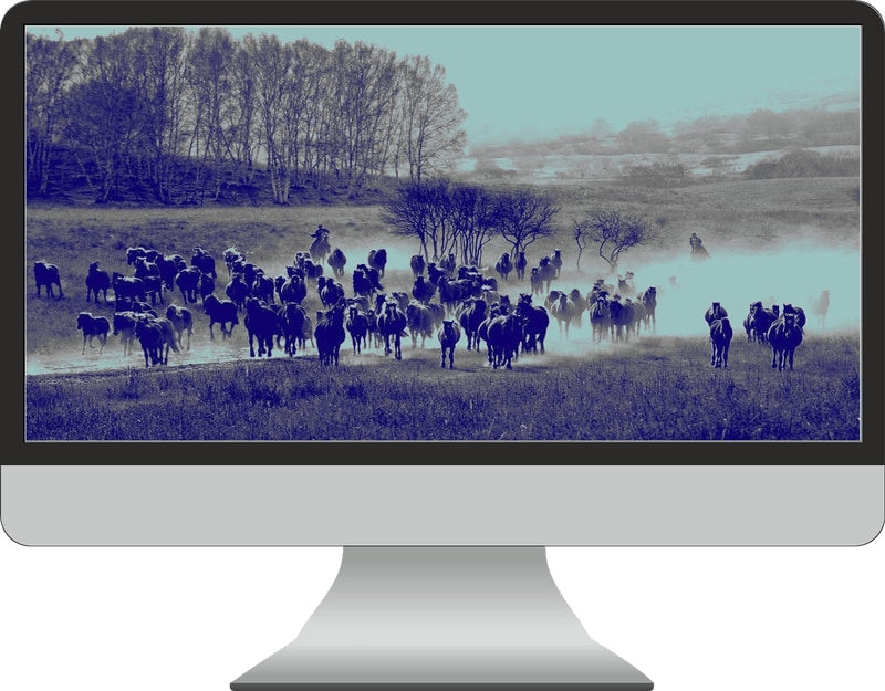 Monitor with horses